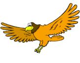 Disegno Falco  pitturato su falco