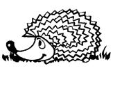 Disegno Riccio  pitturato su riccio