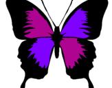 Disegno Farfalla con le ali nere pitturato su michj farfalla