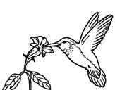 Disegno Colibrì con un fiore  pitturato su GIOIA