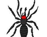 Disegno Ragno tigre  pitturato su ragno