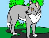 Disegno Lupo pitturato su il  lupo