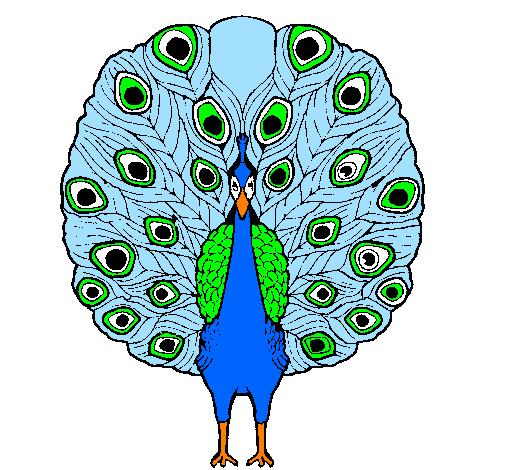 Disegno pavone colorato da utente non registrato il 31 di - Immagini pavone a colori ...