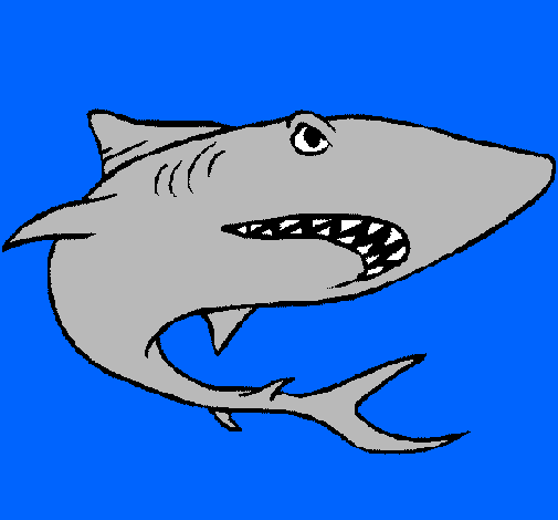 Disegno squalo colorato da utente non registrato il 10 di for Disegno squalo