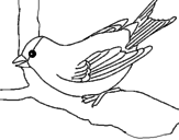 Disegno Passero su un ramo  pitturato su passero