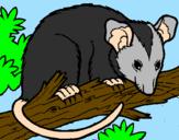 Disegno Scoiattolo Possum marsupiale pitturato su ANDREA