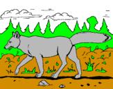 Disegno Coyote pitturato su ANDREA