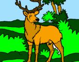 Disegno Cervo adulto  pitturato su chiara