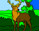 Disegno Cervo adulto  pitturato su angela,elena e chiara