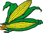 Disegno Pannocchia di granoturco  pitturato su pannocchie mais