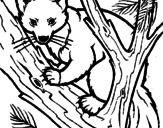 Disegno Martora europea su un albero  pitturato su martora fede