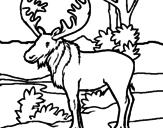 Disegno Alce americano  pitturato su pippo