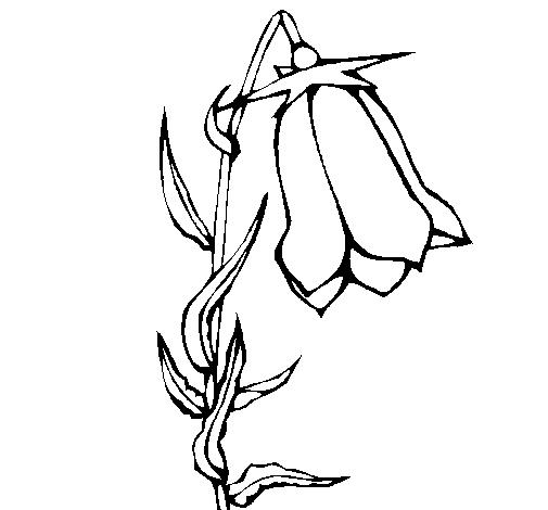 disegni da colorare fiori campanelle