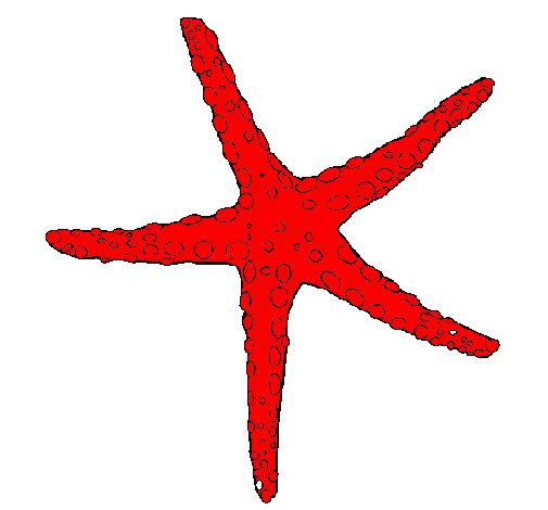 disegno stellina di mare colorato da utente non registrato il 11 ... - Disegno Stella Colorate