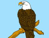 Disegno Aquila su un ramo pitturato su w lazio