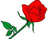 Disegno Rosa  pitturato su la rosa rossa