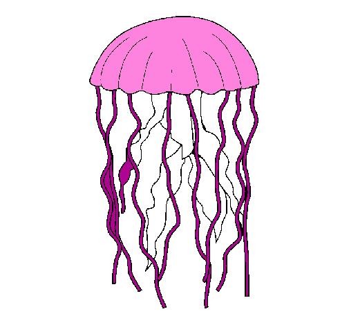 Disegno medusa colorato da utente non registrato il 09 di for Medusa da colorare