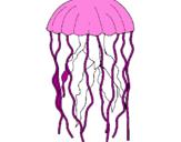 Disegno Medusa  pitturato su medusa