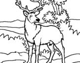 Disegno Cervo adulto  pitturato su Davide da PRIMITIVO