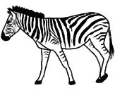 Disegno Zebra  pitturato su indie