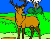 Disegno Cervo adulto  pitturato su vincent