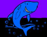 Disegno Squalo pitturato su squalo bianco