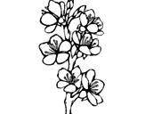 Disegno Fiori di campagna pitturato su fior di pesco