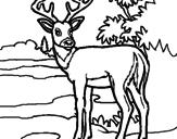 Disegno Giovane cervo pitturato su aa