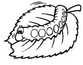 Disegno Bruco che mastica  pitturato su lombrico simpatico