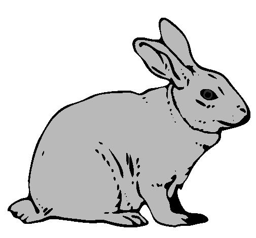 Disegno lepre colorato da utente non registrato il 28 di for Lepre disegno da colorare