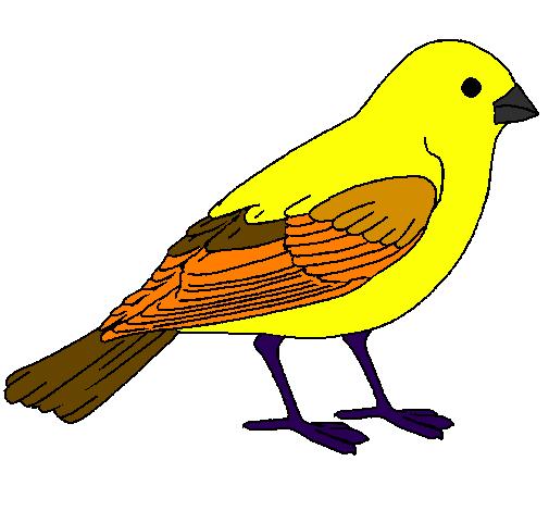 Disegno passero colorato da utente non registrato il 18 di for Uccellino disegno