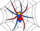 Disegno Ragno pitturato su spiderman