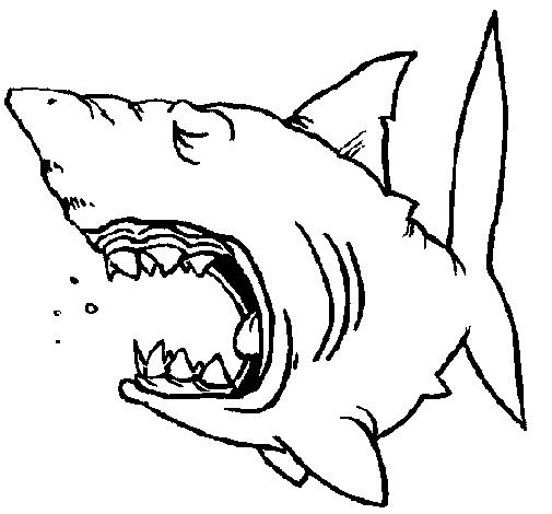 Disegno squalo colorato da utente non registrato il 07 di for Squalo da colorare