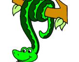 Disegno Serpente avvinghiata ad un albero  pitturato su ,mnnbbvvccxxzsdfgghhj