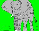 Disegno Elefante  pitturato su SHAKIRA8785