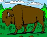 Disegno Bufalo  pitturato su Bella