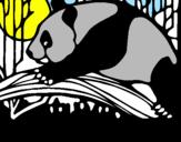Disegno Oso panda che mangia  pitturato su alessio4