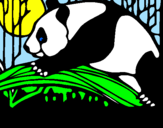 Disegno Oso panda che mangia  pitturato su  zairaa