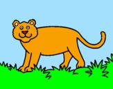 Disegno Panthera  pitturato su gatto giocherellone