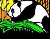 Disegno Oso panda che mangia  pitturato su Aury XD