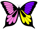 Disegno Farfalla 8 pitturato su anita