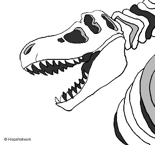 Disegno scheletro di tyrannosaurus rex colorato da utente - Scheletro foglio da colorare ...