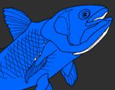 Disegno Pesce  pitturato su uyhuyutytyhnmkmiu8jjmkk