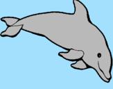 Disegno Delfino felice  pitturato su katy
