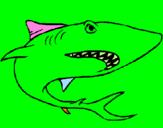 Disegno Squalo pitturato su gigiotta