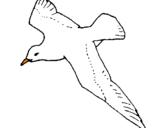 Disegno Gabbiano  pitturato su anna