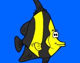 Disegno Pesce tropicale  pitturato su mieel