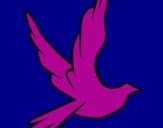 Disegno Colomba della pace in volo pitturato su ALBA