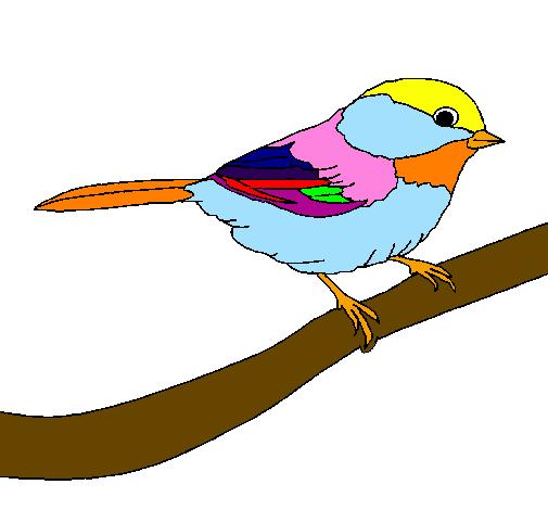 Disegno uccellino colorato da utente non registrato il 05 for Uccellino disegno