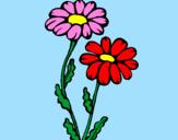 Disegno Margherite  pitturato su ALESSIA